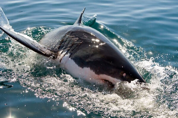 Shark Cage Diving, Mossel Bay, South Africa