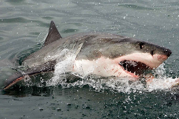 Shark cage diving Mossel Bay South Africa