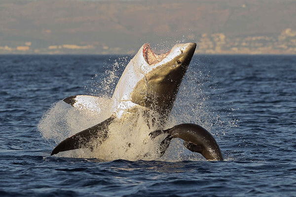 Shark cage diving tours Mossel Bay