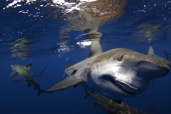 Shark diving in Durban, South Africa