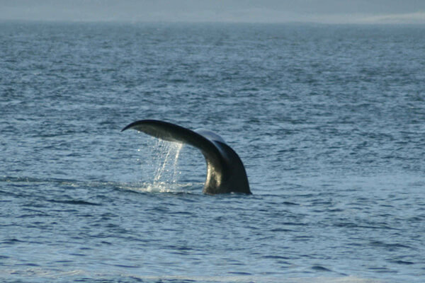 Whale watching Benguela