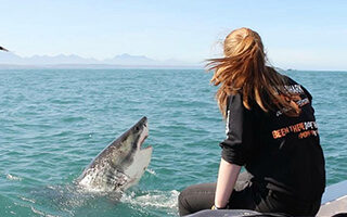 Shark cage diving Mossel Bay with White Shark Africa